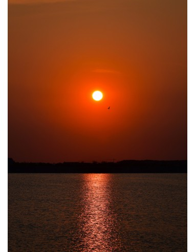 Bird and Sunset - Canvas