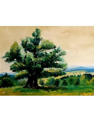 Stejarul lui Petru