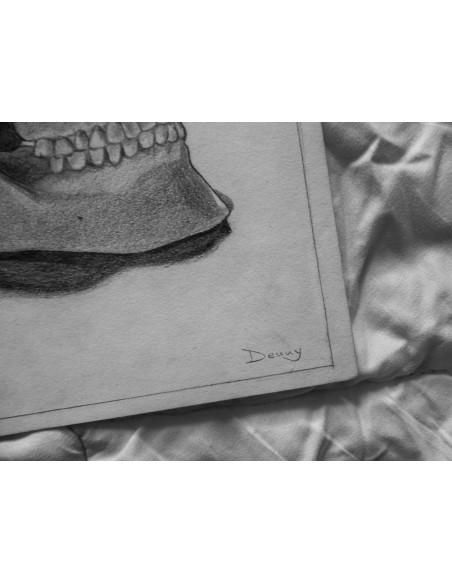craniul uman, 3/4 view