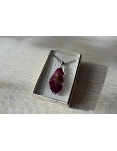 Pandativ fatetat - Garden Rose