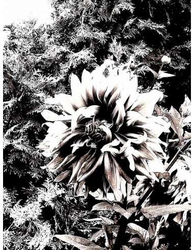 Extaz în alb și negru