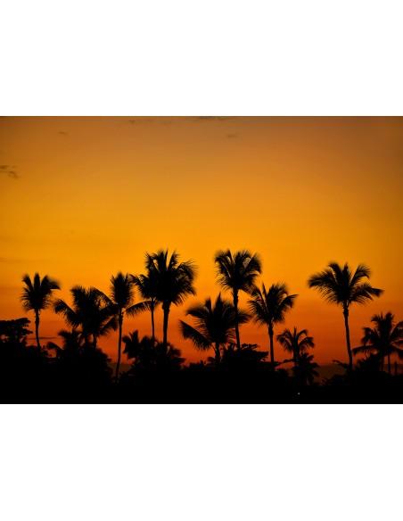 Apus printre palmieri