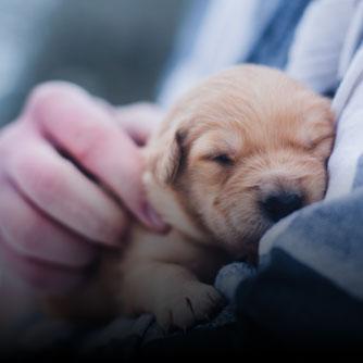 Pentru iubitori animale