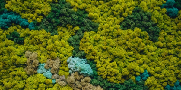 Despre lichenii stabilizați